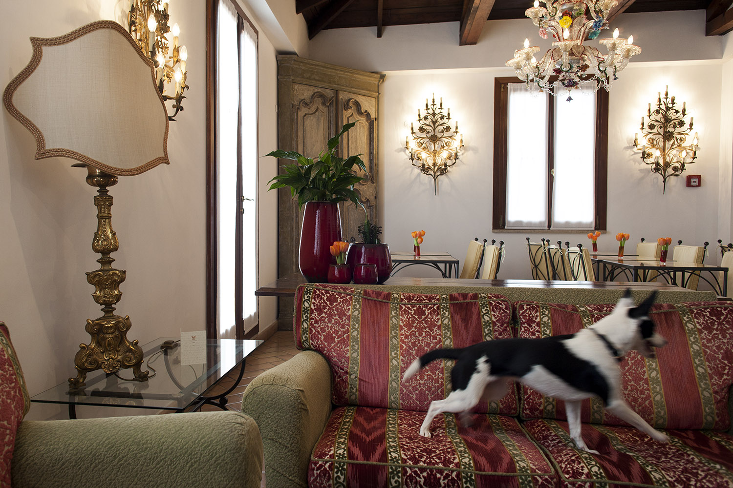 Pet friendly Hotel Columbia Rome